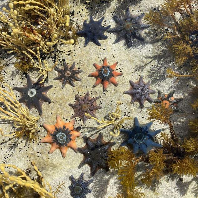 One KI Starfish