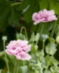 The Lookout_Garden_031.jpg