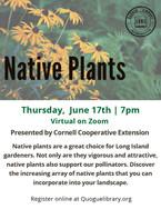Native Plants on Long Island