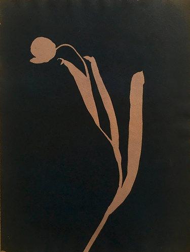 Cyanotypi-original : Enkel, mørk tulipan