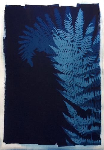 Cyanotypi-original : Mørke bregner
