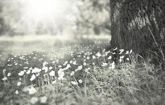 tree-276014_1920_edited.jpg