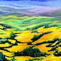 Hillside of Wild Mustard (McClure Pass)