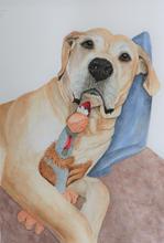 Nala Pet Portrait