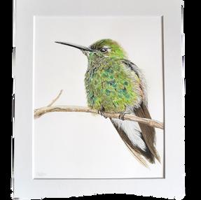 Hummingbird – by Sue £75