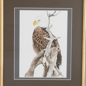 """""""Uncle Sam"""" Bald Eagle - by Sue £140 Unframed £95"""