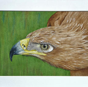 Golden Eagle by Sue £95