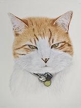 Joey 2.jpg    Cat Portrait