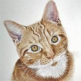 Teddy.jpg  cat portrait