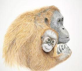 orangiutan.jpg  Orangutan painting