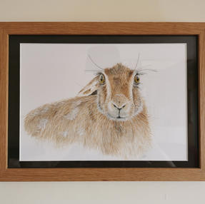 Hello Hare - by Sue £120 Unframed £80