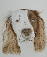 Pet Portrait Commission 2