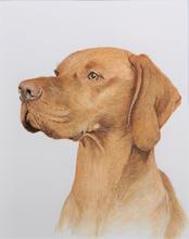 Reggie - Vizsla Pet Portrait