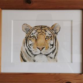 """""""Tiger, Tiger"""" – by Sue £145 Unframed £95"""