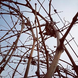 Winter Vines.png