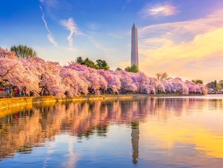 The National Cherry Blossom Festival