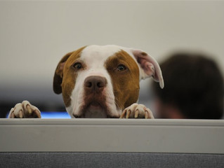 Working like a dog: Companies find benefits in going pet-friendly