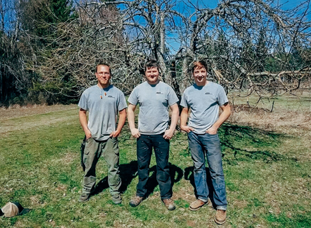 Bonners Ferry's Local Stump Grinding and Tree Service Specialist