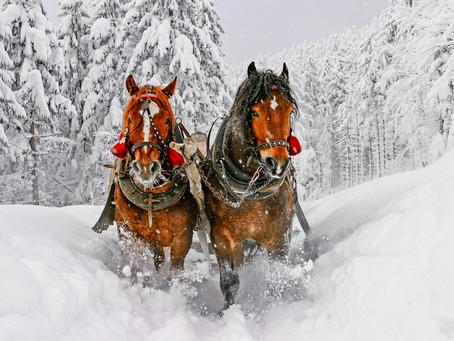 Top Spots for the Best Winter Activities