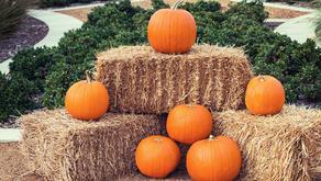 Pumpkins, Apples, Baked Goods, Oh My!
