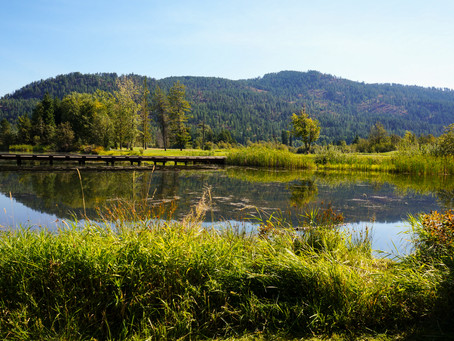 Explore all that Sandpoint has to Offer