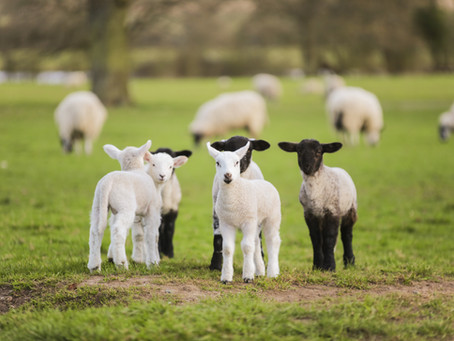 Meeting All Your Farm, Feed, Garden and Pet Needs