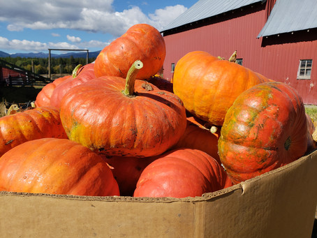More than a Pumpkin Patch