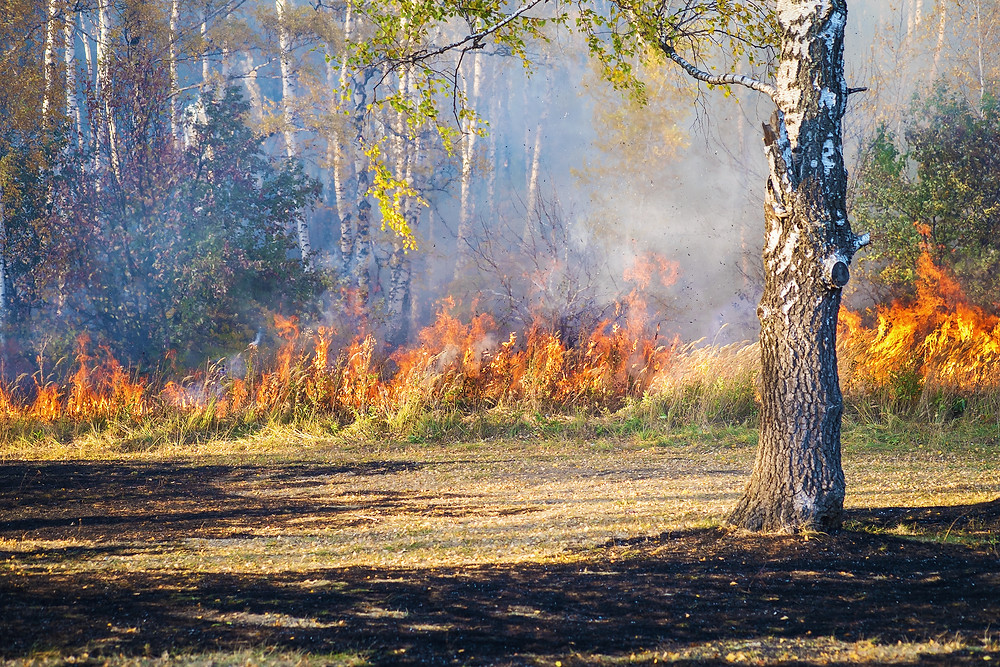 Nature's Response to Wildfire