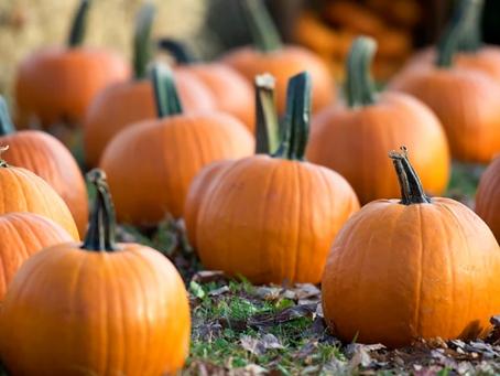October 23 - Get Your Halloween Fix!