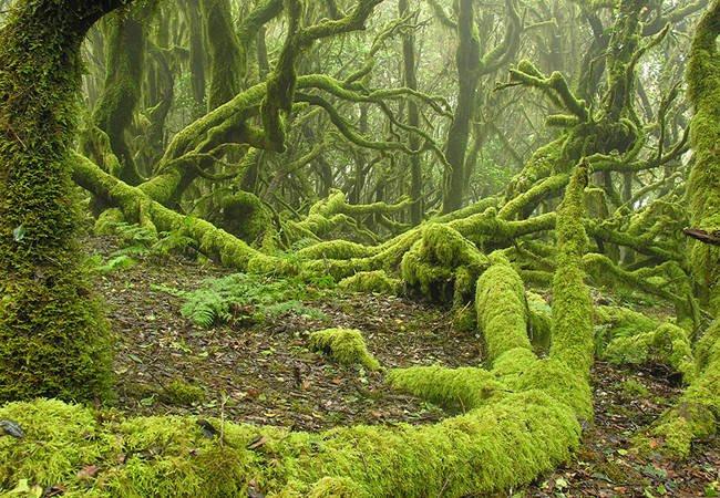 Parque Nacional de Garajonay, La Gomera, Islas Canarias