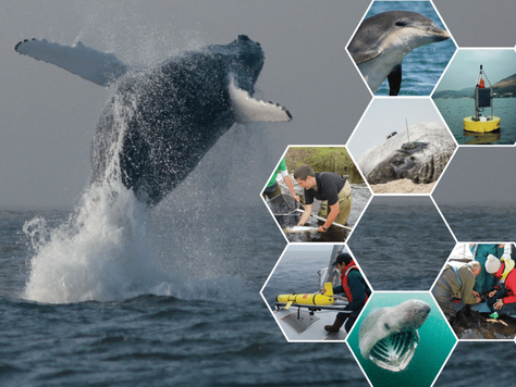 Announcing SeaMonitor: An international conservation-driven research programme