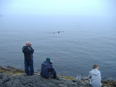 Basking Shark Encounters 101