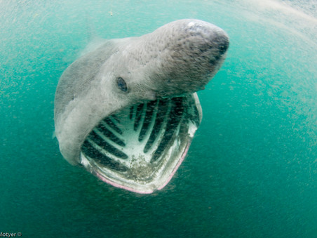 SAVE OUR SHARK