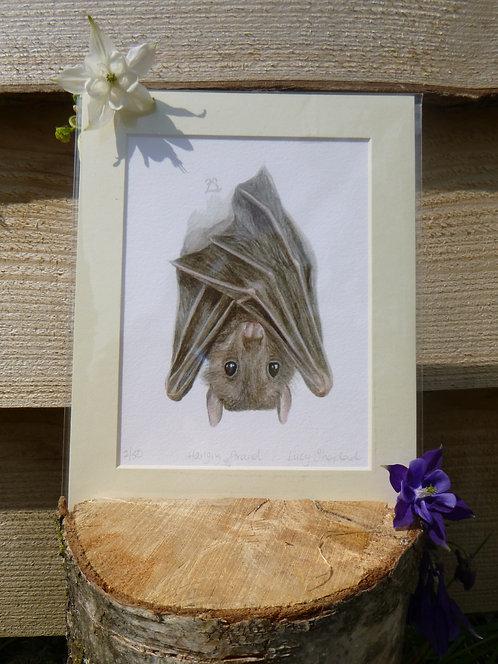 'Hanging Around' Egyptian Fruit Bat Fine Art Print