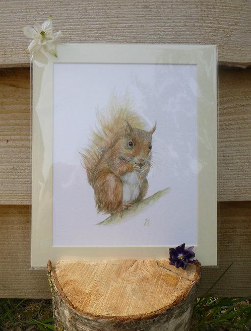 'Little Red' Red Squirrel Fine Art Print