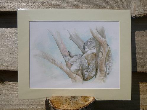 'Treetop Slumber' Koala Fine Art Giclee Print