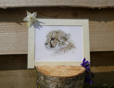 'Serenity' Cheetah Cub Fine Art Giclee Print