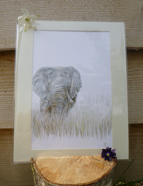'On the Edge' Elephant Fine Art Giclee Print