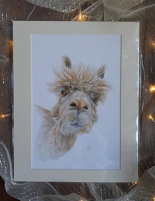 'Did Somebody Say Cake?' Alpaca Fine Art Giclee Print