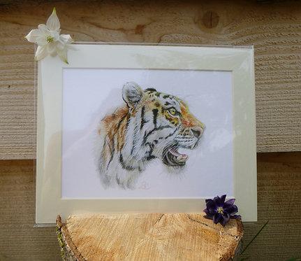 'Tigress' Fine Art Giclee Print