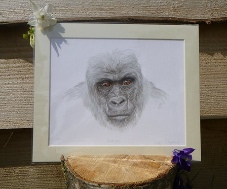 'Intrigue' Lowland Gorilla Fine Art Giclee Print