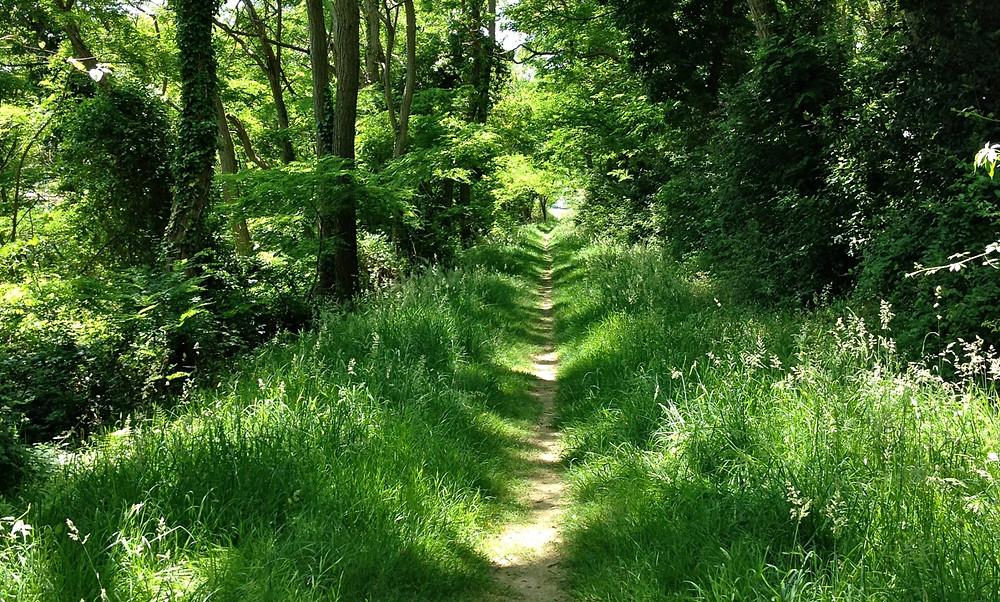 La naturopathie est la médecine traditionnelle issue de la nature, utilisant des remèdes simples et inoffensifs