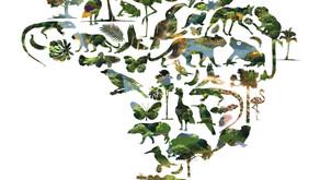 Saiba tudo sobre a Indústria Brasileira de Árvores- IBA