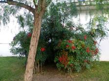 buissons.jpg