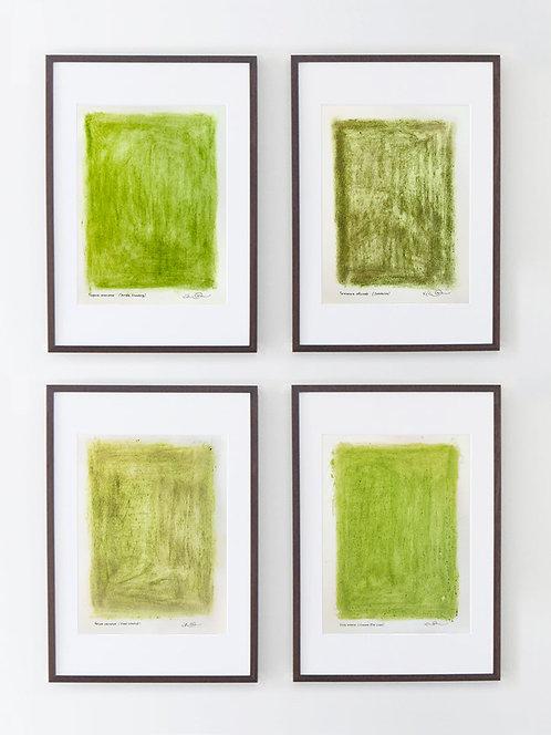 "Hanna von Goeler - ""Plant Pigment Monochromes"" (grid of 4)"