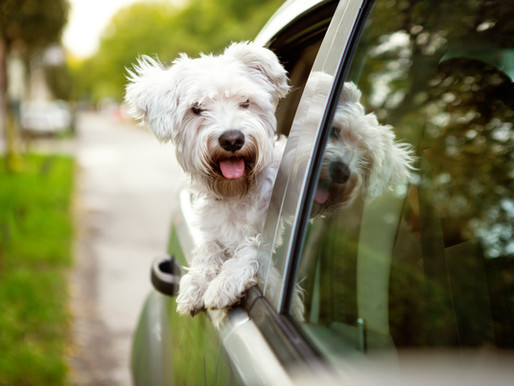 It's warming up outside...does your dog like to feel the breeze?