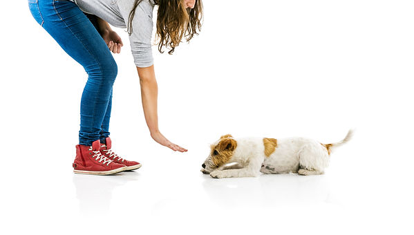 bigstock-Woman-training-dog-isolated-743