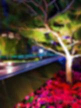 Tree Amid the City Lights 3.375x5.jpg