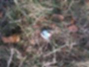 nest robin egg.jpg
