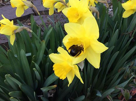 bee in flower BP.JPG